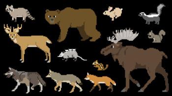 North American Forest Mammals