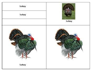 North American Game Bird – Turkey