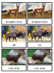 North American Wildlife--Animals of North America Montessori 3-part cards