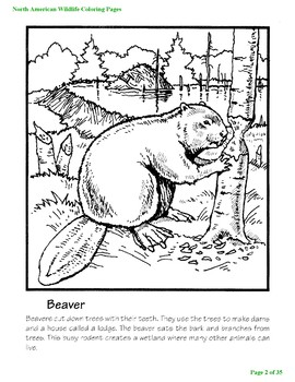 North American Wildlife Coloring Pages