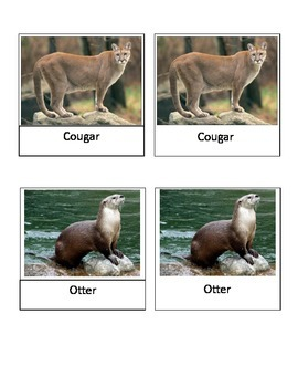 North American Wildlife Montessori 3-part cards