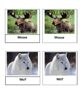 North American Wildlife Montessori 3-part cards