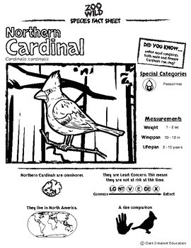 Northern Cardinal -- 10 Resources -- Coloring Pages, Reading & Activities