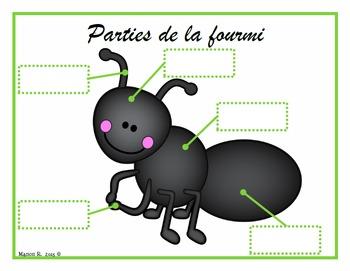 Nos amis les insectes (écriture cursive)