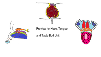 Nose, Tongue, and Taste Bud Unit