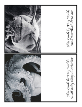 Note Card Sampler with Images from a Scanning Electron Microscope