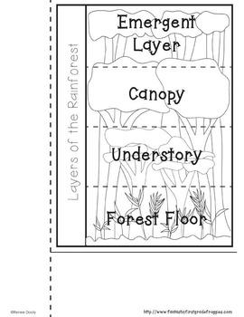 Rainforest Interactive Notebook
