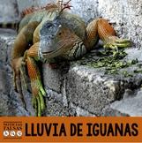 Noticias falsas: Lluvia de iguanas