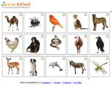 Nouns Animals - SmartEdTech