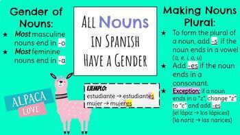 Nouns & Articles in Spanish - Introduction & practice activities