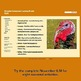 November Internet Activity FREEBIE - Turkey Diagram and Informational Text