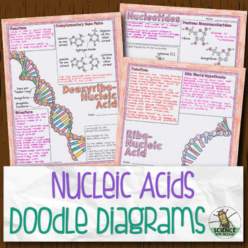 Nucleic Acids Biology Doodle Diagrams By Science With Mrs Lau Tpt