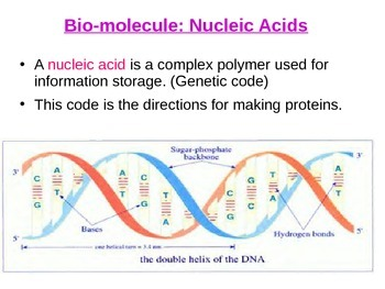 Nucleic Acids Lecture PPT