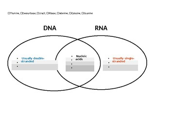 Nucleic Acids & Protein Synthesis Concept Maps (electronically fillable)