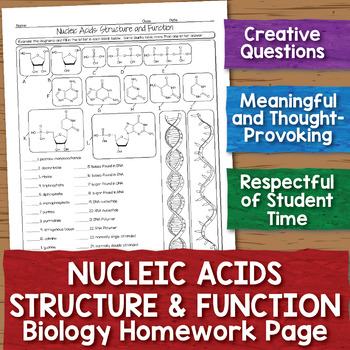 Nucleic Acids Structure and Function Biology Homework Worksheet