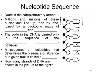 Nucleotide to Chromosome