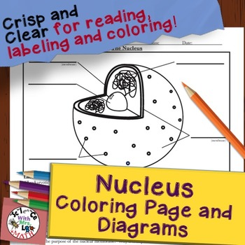 Nucleus Cell Diagram Coloring Page and Reading Page