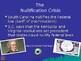 Nullification Crisis Powerpoint Flow Chart Andrew Jackson Activity