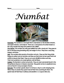 Numbat - marsupial informational article lesson facts questions vocab