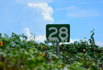 """Number """"28"""" Sign Stock Photo #180"""