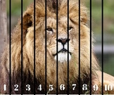 Number Sequence Puzzle (Animal 1-10)