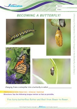 Numbers - The Four Stages in the Butterfly Life Story - Grade 4