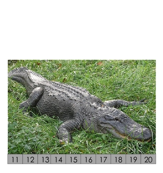 Numbers in consecutive order animal puzzles 11-20