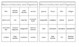 Nutrients and Digestion bingo game