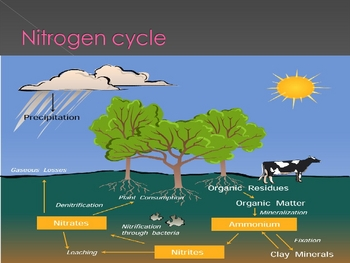 Nutrition & Energy Flow