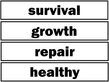Nutrition Pocket Chart Vocabulary   EDITABLE
