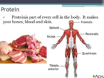 Nutrition - Protein (POWERPOINT)