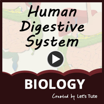 Nutrition in Human Beings| Human Digestive System