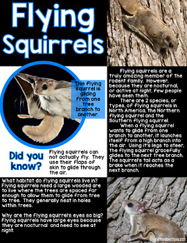 Nutty for Squirrels:  A Non-Fiction Squirrel Unit