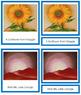 O'Keeffe (Georgia) 3-Part Art Cards - Color Borders