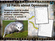 OPOSSUMS - visually engaging PPT w facts, video links, handouts & more