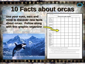 ORCA (Killer Whale) 10 facts. Fun, engaging PPT w links &