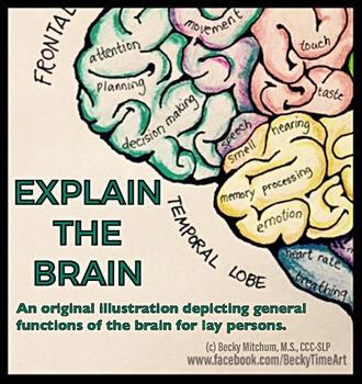 ORIGINAL ART - Explain the Brain