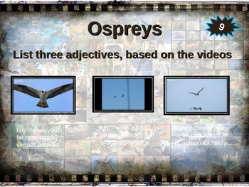 OSPREY: 10 facts. Fun, engaging PPT (w links & free graphic organizer)