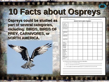 OSPREY: 10 facts. Fun, engaging PPT (w links & free graphi