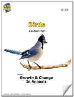 Birds Lesson Plan