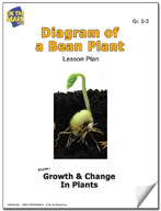 Diagram of a Bean Plant Lesson Plan