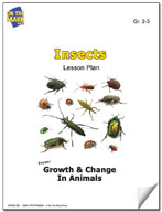 Insects Lesson Plan