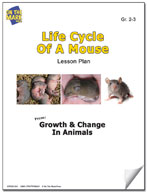 Life Cycle of a Mouse Lesson Plan
