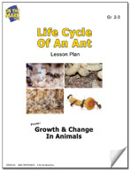 Life Cycle of an Ant Lesson Plan