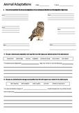 OWL Adaptations Worksheet | Year 5 Science (ACSSU043)