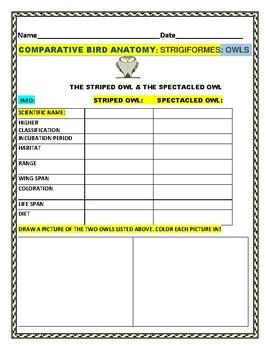 OWLS: A BIRD COMPARATIVE ANATOMY ASSIGNMENT