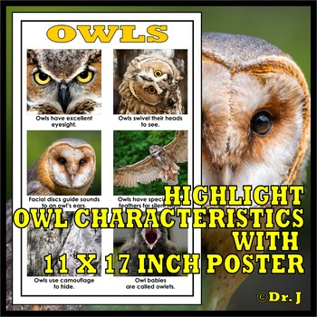 Image of: Clipart Nocturnal Animals Owls Bookactivity Bundle Teachers Pay Teachers Nocturnal Animals Owls Bookactivity Bundle By Lets Get Real Tpt