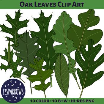Oak Leaves Clip Art