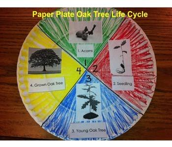 Life Cycle of Oak Trees