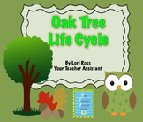 Life Cycle of Oak Trees